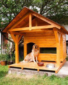 Как приучить собаку к будке