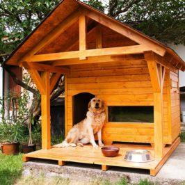 будка для собаки, как приучить