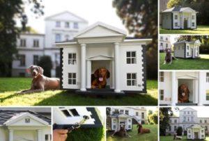 Классная будка для собаки
