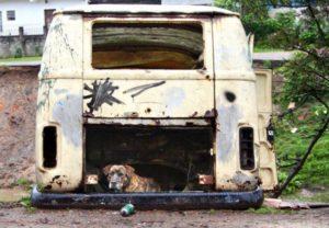 Незвичайні собачі будки | Фото