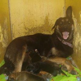 Утепленная и отапливаемая будка для собаки