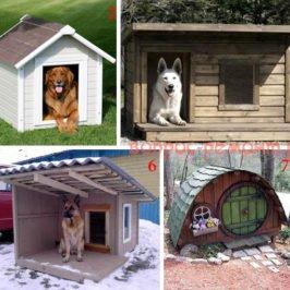 виды типы будки для собак
