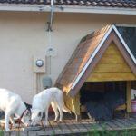 веранда-для-собаки10