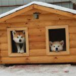 На две собаки 25