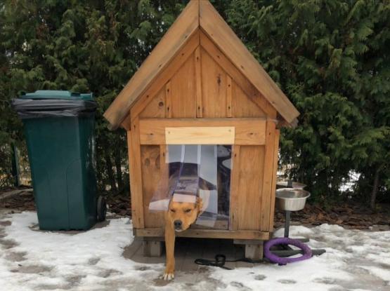 силиконовая шторка для собачьей будки